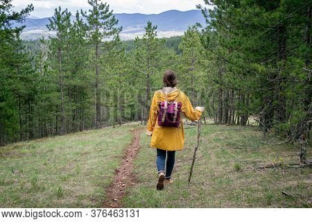 Woman In Yellow Raincoat Hiking In Pine Forest. Woman Hiking In Nature On Tara Mountain In Serbia. W