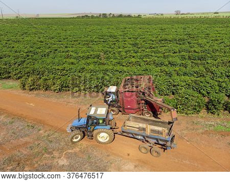 Machine In The Field Harvesting Coffee In The Plantation Of Brazil