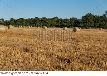 Bales Of Hay. Baled Straw After Harvest