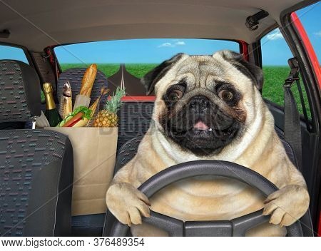 The Pug Dog Is Driving A Red Car On The Highway. A Paper Bag With Food Is Next To Him.