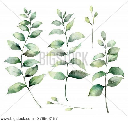 Set Of Watercolor Eucalyptus Branches. Hand Painted Eucalyptus Thick Branches And Leaves Isolated On