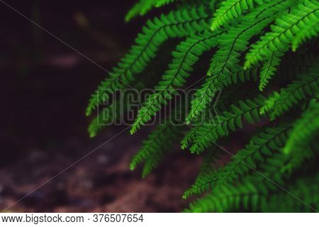 Abstract Emerald Background. Fern Leaves Close-up. Green Fronds. Natural Floral Frame. Ornamental Pl