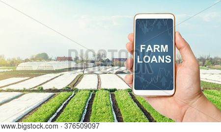 Farmer Holds A Phone With Farm Loans On Background Of Landscape Potato Plantations. Anti-crisis Meas