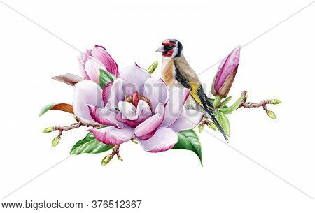 Beautiful Magnolia Flower With Goldfinch Bird On A Tree Branch Watercolor Painted Illustration. Tend