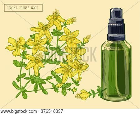 Medical Saint Johns Wort Blooming Branch And Sprayer, Hand Drawn Botanical Illustration In A Trendy