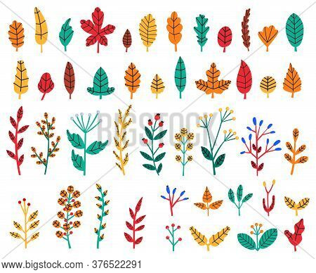 Autumn Leaves. Fall Forest Leaves And Berries, Cozy Doodle Floral Herbs, Wildflowers, Botanical Tree