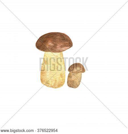 Forest Edible Mushroom Boletus Edulis Watercolor Illustration Yellow Boletus, Seasonal Autumn Realis