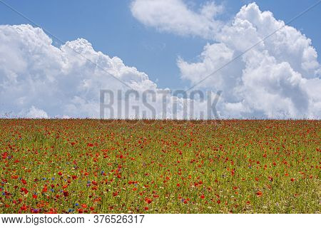 Famous Flowering Of Lentils And Poppies In Castelluccio Di Norcia In The Park Of The Sibillini Mount