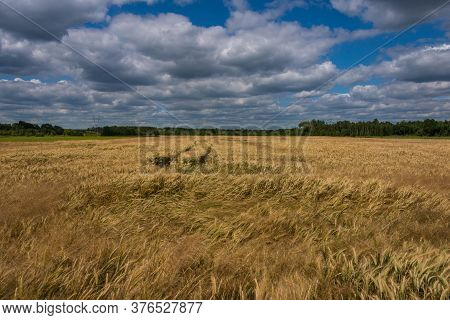 A Blue, Slightly Cloudy Sky Over A Grain Field.\na Field Covered With Rye. It Is July Day, The Grain