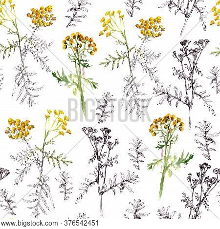 Seamless Pattern Of Tansy Sprigs, Watercolor And Graphic Drawing