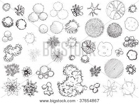 Hand drawn trees and shrubs black and white plan view