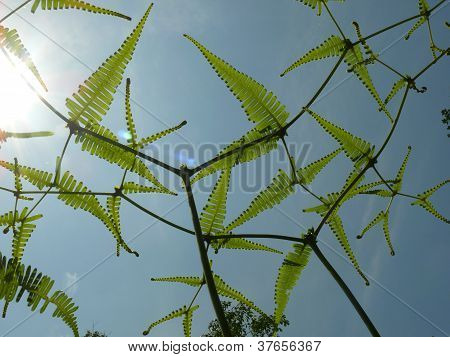 Young ferns through the sunlight