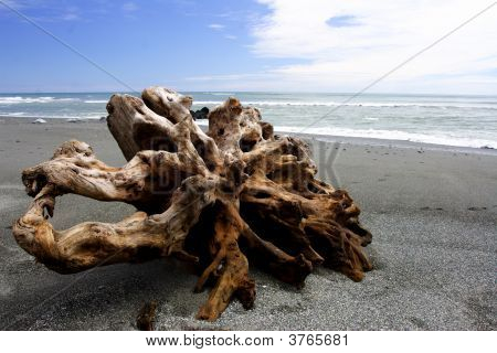 Old Root On The Beach