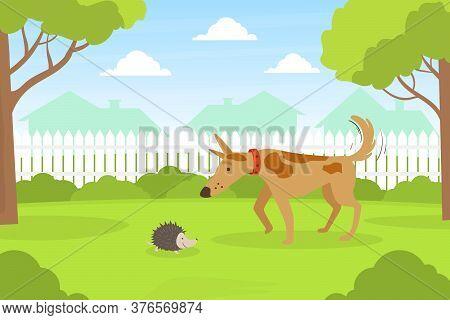 Cute Dog Looking At Hedgehog Sitting On Lawn In Backyard, Beautiful Summer Landscape Flat Vector Ill