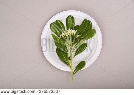 Paper White Plate On A Gray Background. The Concept Of Eco Glassware And Recycling. Top View. Free S