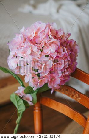 Large Pink Hydrangea On A Chair In The Interior.