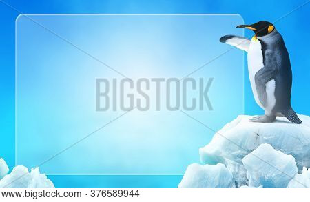Penguin Pointing Its Flipper Wing In An Empty Space Ice Glass For Advertising Or Announcement.