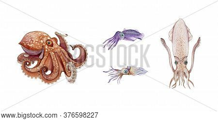 Octopus, Squid, Cuttlefish And Calamari Watercolor Illustration Set. Hand Drawn Sea Life Animals. Fr