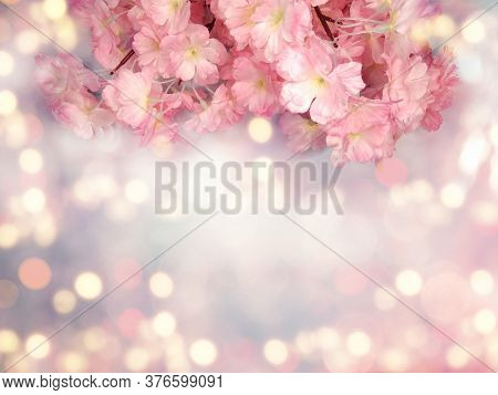 Spring Backgroung Flowering Sakura Cherry Flowers Blossom Floral Nature And Abstract Bokeh