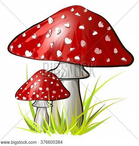 Two Cartoon Amanita Mushroom. Vector Colorful Illustration
