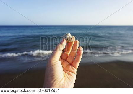 Seashell In A Female Hand On A Seashore Background. A Woman Holds A Seashell With Her Fingers On A B