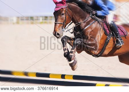A Bay Racehorse With A Rider In The Saddle Quickly Jumps Over A High Yellow-and-black Barrier At A C