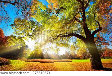 Colorful Autumn Landscape Shot Of A Gorgeous Tree Changing Foliage Colors In A Park, With Blue Sky A