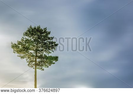 A Lone Tree Against A Dark Blue Sky. Symbol Of Loneliness. Landscape Nature, Copy Space
