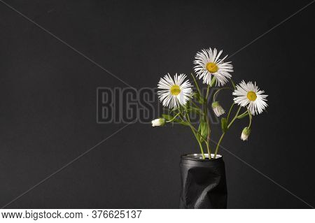 Three White Daisies On A Black Background. Beautiful Bouquet Of Flowers In A Vase. Place For Text, C