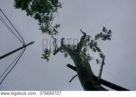 Super Cyclone Amphan Broke A Tree Which Fell On Street Light And Broke It. The Devastation Has Made
