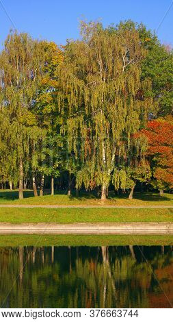 City Park In Gold Fall At Dry Sunny Summer Day