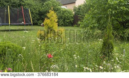 Colorful Wildflowers And Green Grass On The Meadow. Nature Concept. Wildflowers Background.