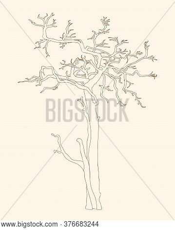Black Outline Illustration  Crooked Tree Without Leaves For Kid And Adult Coloring Book, Tutorials.