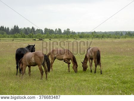 A Herd Of Young Foals Grazing On A Field.