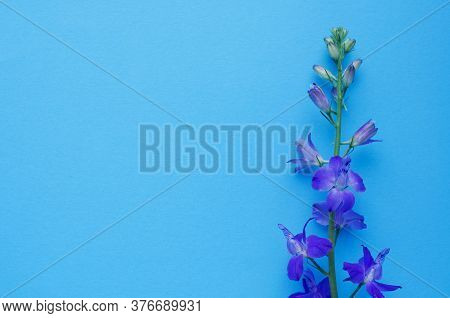 Purple Delphinium Flower On A Blue Background. Top View, Copy Space. Concept Mother's Day, Family Da
