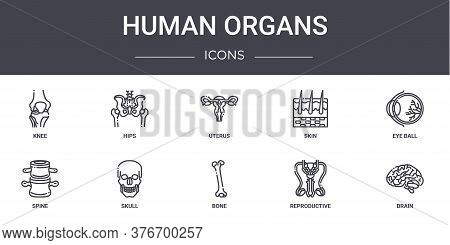 Human Organs Concept Line Icons Set. Contains Icons Usable For Web, Logo, Ui Ux Such As Hips, Skin,