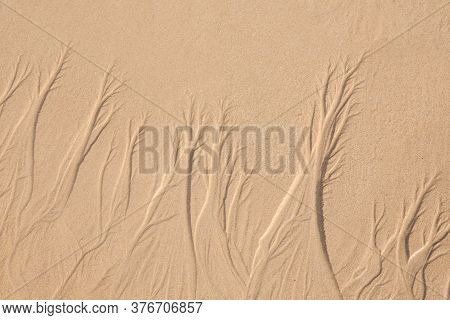 Sand Texture. Sandy Beach For Background.