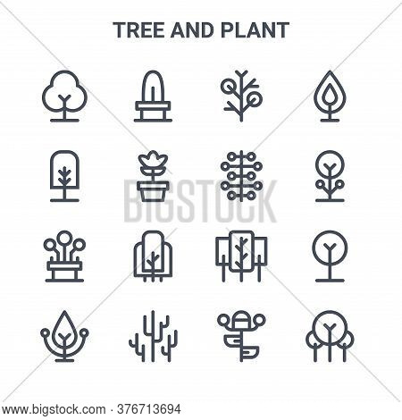 Set Of 16 Tree And Plant Concept Vector Line Icons. 64x64 Thin Stroke Icons Such As Cactus, Tree, Bo