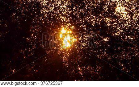 Orange Flare Light Backside Shadows Tree,star Light