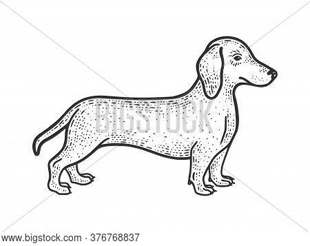 Dachshund Sausage Dog Sketch Engraving Vector Illustration. T-shirt Apparel Print Design. Scratch Bo