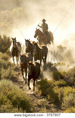 Cowboy Following His Horses