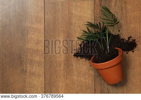 Overturned Terracotta Flower Pot With Soil And Plant On Wooden Background, Flat Lay. Space For Text