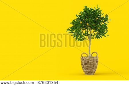 Creative Layout With Lemon. Lemon Tree With Fruits In Wicker Pot On Yellow Background. Citrus Tree,