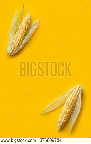 Vertical Copy Space With Fresh Ripe Corn Cobs At Minimal Yellow Background. Concept Of Harvesting Fo