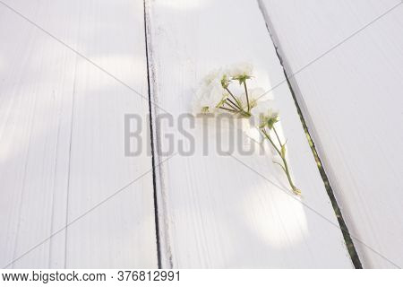 Sprig Of White Small Roses On White Wooden Background. Happy Birthday. Greeting Card For Valentines,