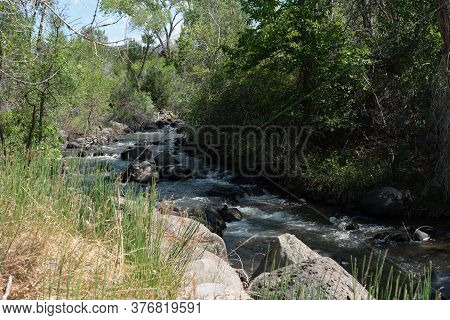 Creek Runs Through Wooded Green Banks On The Side Of The Grand Mesa In Western Colorado