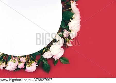 Pink Colored Roses Buds And Green Leaves Composition On White And Red Background. Flat Lay Style.