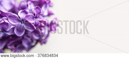 Beautiful Flowering Branch Of Lilac Flowers Close-up Macro Shot With Blurry Background. Spring Natur