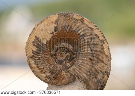 Close Up Of An Ammonite Fossil With A Green Background