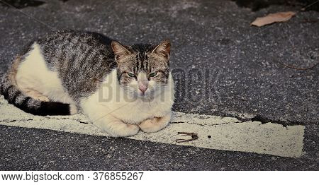 A Feline In The Streets Of Salvador, Resting Under The Afternoon Climax.